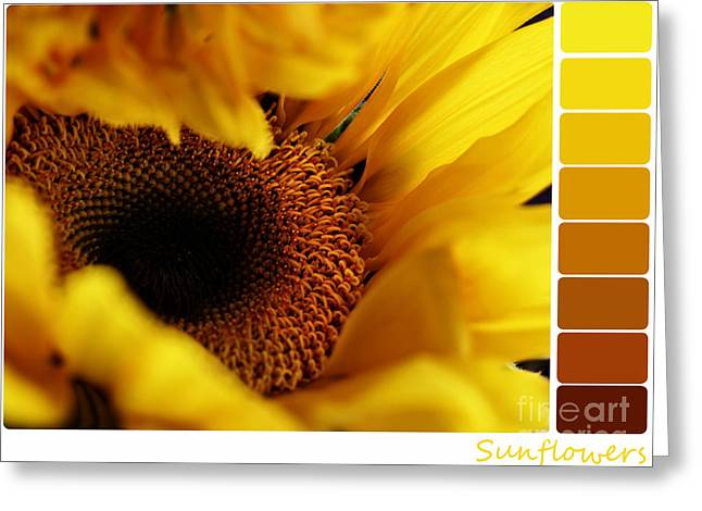 Full Spectrum Greeting Cards - Sunflower Palette Greeting Card by Stephanie Frey