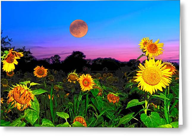 Sunflower Patch Greeting Cards - Sunflower Patch and Moon  Greeting Card by Randall Branham
