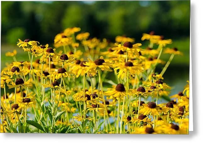 Sunflower Patch Greeting Card by John Ullrick