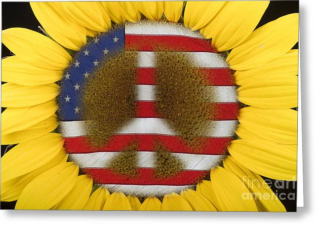 Americano Greeting Cards - Sunflower Peace Sign Greeting Card by James BO  Insogna