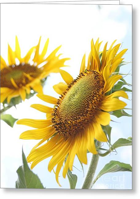 Farmstand Greeting Cards - Sunflower Perspective Greeting Card by Kerri Mortenson