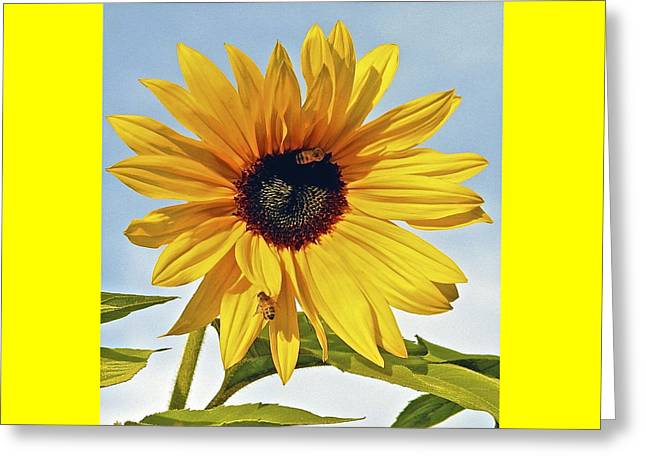 Yellow Sunflower Pyrography Greeting Cards - Sunflower Pollination Greeting Card by DUG Harpster
