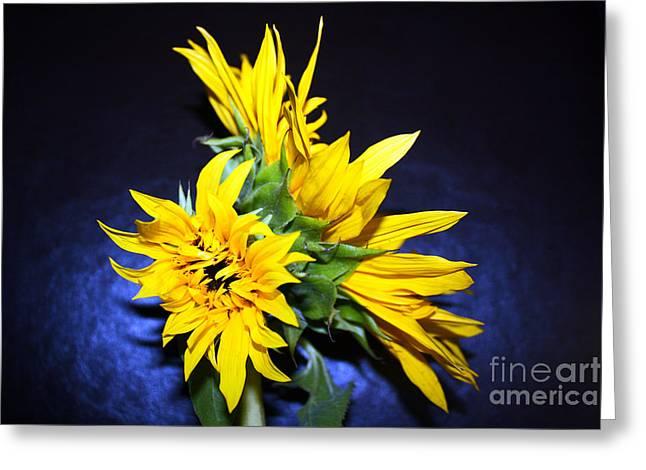 Solar Plexus Chakra Greeting Cards - Sunflower Portrait Greeting Card by Kelly Holm
