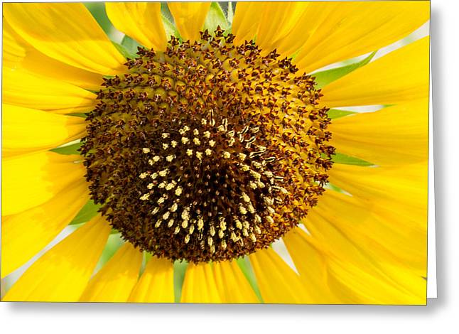 Reproductive Greeting Cards - Sunflower Reproductive Center Greeting Card by Douglas Barnett