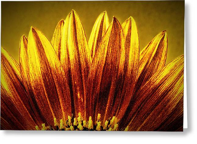 Richard Allen Greeting Cards - Sunflower Greeting Card by Richard Allen