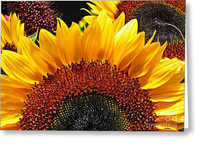 Green And Yellow Photographs Greeting Cards - Sunflower Rise Greeting Card by Sarah Loft