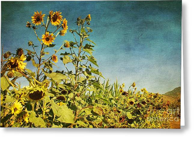 Garden Scene Digital Greeting Cards - Sunflower Scenic Greeting Card by Peggy J Hughes