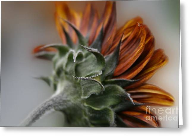 The Nature Center Greeting Cards - Sunflower Greeting Card by Sharon Mau