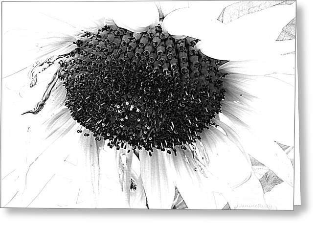 Sunflower - Simply Sweet Greeting Card by Janine Riley