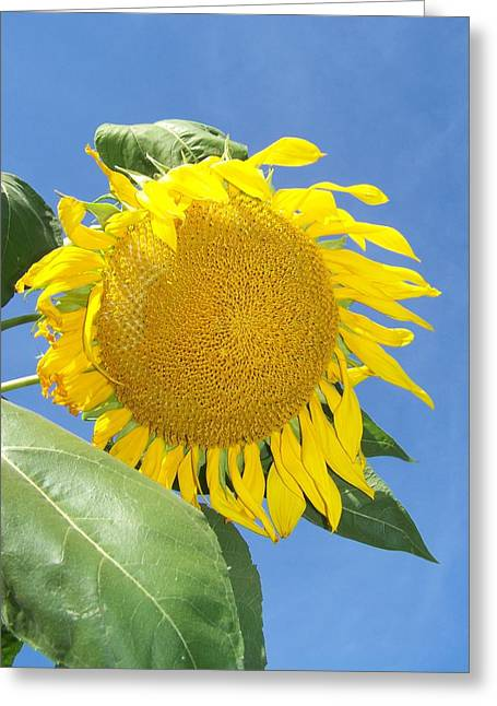 Noreen Hacohen Greeting Cards - Sunflower Sky Greeting Card by Noreen HaCohen