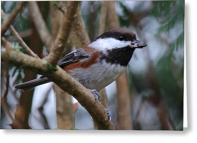 Feeding Birds Greeting Cards - Sunflower Snack Greeting Card by Randy Hall
