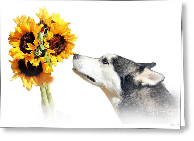 Huskies Photographs Greeting Cards - Sunflower Greeting Card by Stephanie Laird