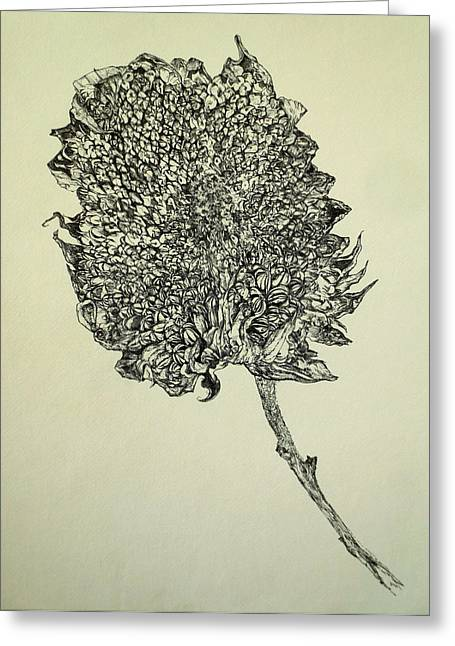 Interior Still Life Drawings Greeting Cards - Sunflower still life Greeting Card by Mark Van Ert