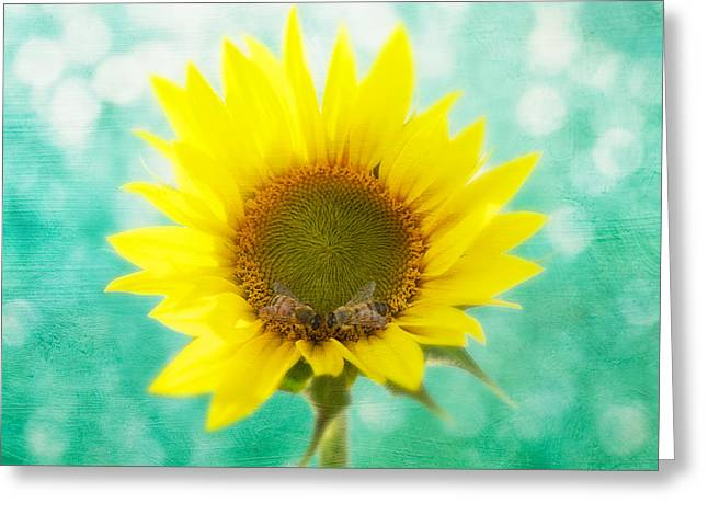 Sunflower Art Greeting Cards - Sunflower - Sun Kiss 2 Greeting Card by John Hamlon
