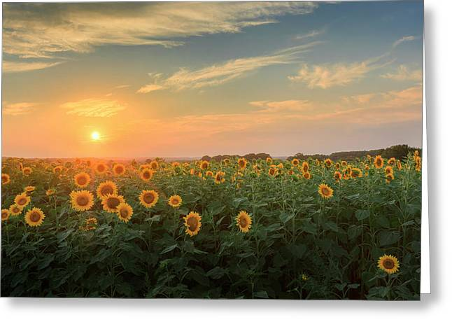 Griswold Connecticut Greeting Cards - Sunflower Sundown Greeting Card by Bill  Wakeley