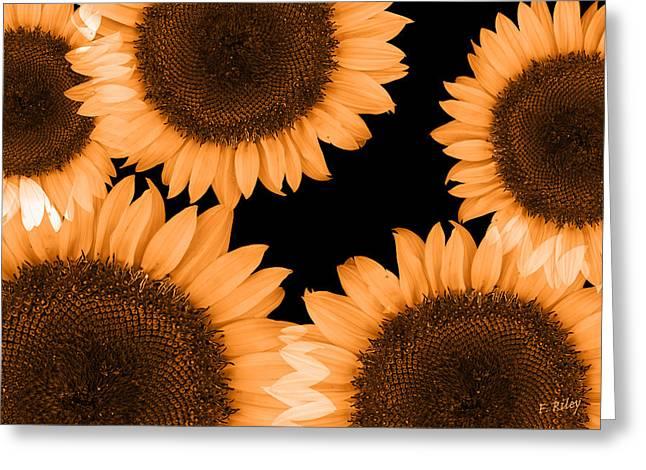 Stamen Digital Greeting Cards - Sunflower Sunrise Greeting Card by Fran Riley