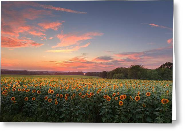 Griswold Connecticut Greeting Cards - Sunflower Sunset Greeting Card by Bill  Wakeley