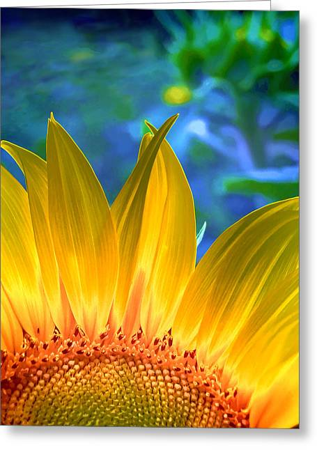 Yellow Sunflower Greeting Cards - Sunflower Sunshine Greeting Card by Pennie  McCracken