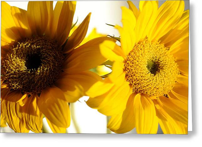 Burst Greeting Cards - Sunflower Symphony Greeting Card by Luke Moore