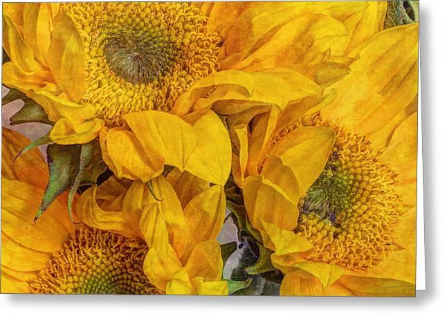Trio Greeting Cards - Sunflower Trio Greeting Card by Heidi Smith