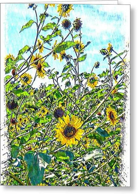 Michelle Greeting Cards - Sunflower Valley Greeting Card by Michelle Frizzell-Thompson