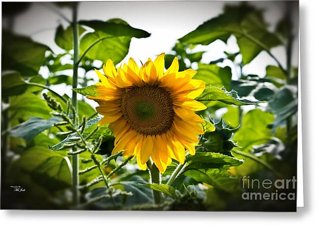 Sunflower Vignette Edges Greeting Card by Ms Judi