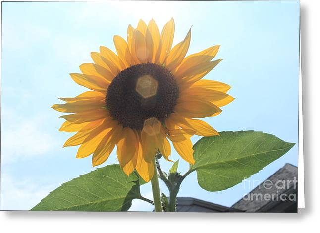 Lotus Greeting Cards - Sunflower with Flare 1 Greeting Card by Lotus