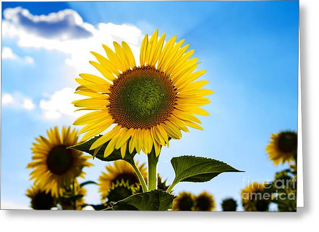 Sunflowers Greeting Card by   CursedSenses