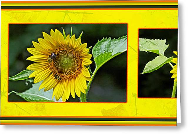 Yellow Sunflower Greeting Cards - Sunflowers - A Portrait In YHellow Greeting Card by Mother Nature