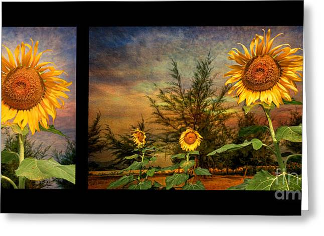 Green Leafs Greeting Cards - Sunflowers Greeting Card by Adrian Evans