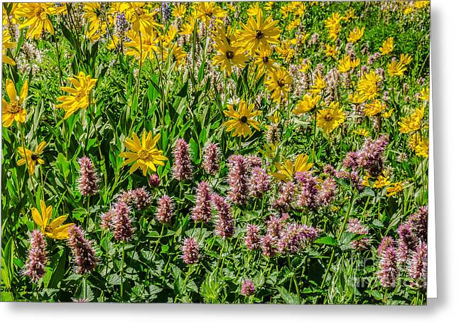 Sue Smith Greeting Cards - Sunflowers and Horsemint Greeting Card by Sue Smith