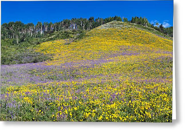 Yellow Sunflower Greeting Cards - Sunflowers And Larkspur Wildflowers Greeting Card by Panoramic Images