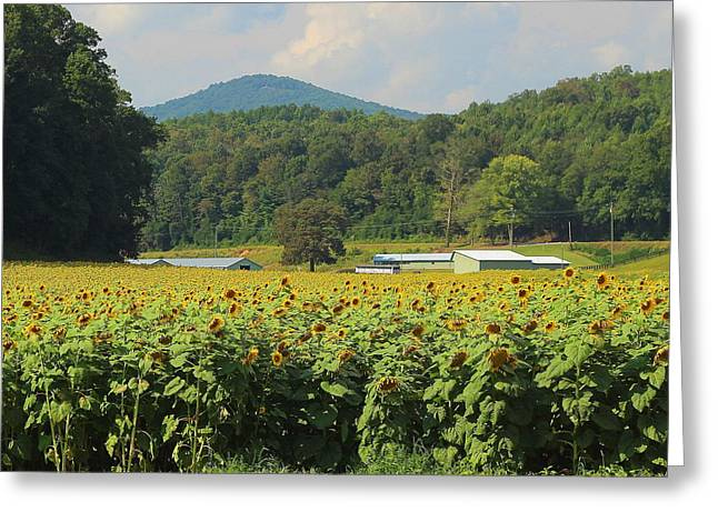 Sunflower Patch Greeting Cards - Sunflowers And Mountain View 2 Greeting Card by Cathy Lindsey
