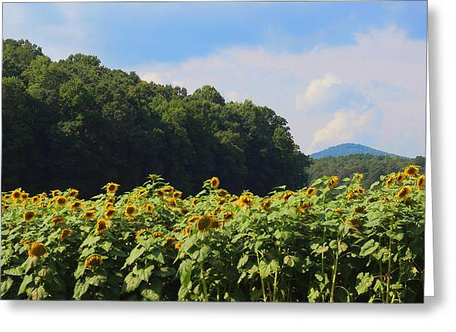 Sunflower Patch Greeting Cards - Sunflowers And Mountain View Greeting Card by Cathy Lindsey