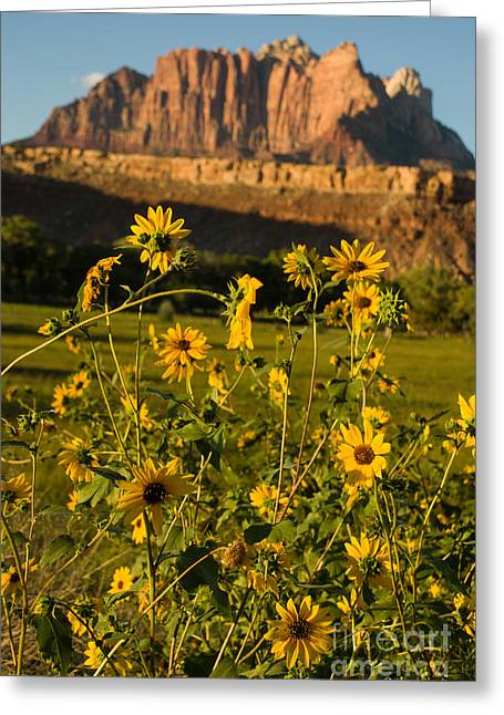 Geobob Greeting Cards - Sunflowers and Red Rocks of Zion and Mount Kinesava Rockville Utah Greeting Card by Robert Ford