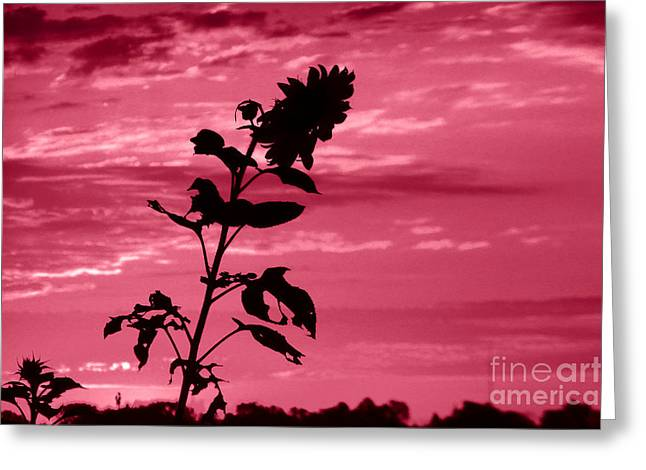 Indiana Flowers Greeting Cards - Sunflowers And Red Sky Greeting Card by Tina M Wenger