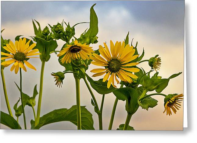 Sunflowers Greeting Card by Barbara Smith