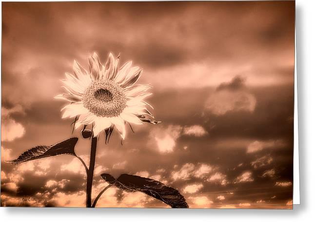 Bob Orsillo Greeting Cards - Sunflowers Greeting Card by Bob Orsillo