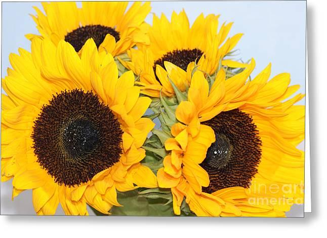Bouquet Of Sunflowers Greeting Cards - Sunflowers  Greeting Card by Carol Lynch