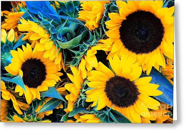 Organic Greeting Cards - Sunflowers Greeting Card by Colleen Kammerer