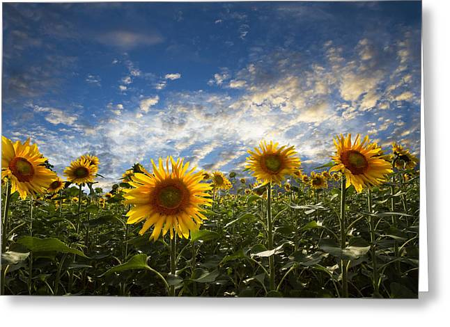 Swiss Photographs Greeting Cards - Sunflowers Greeting Card by Debra and Dave Vanderlaan