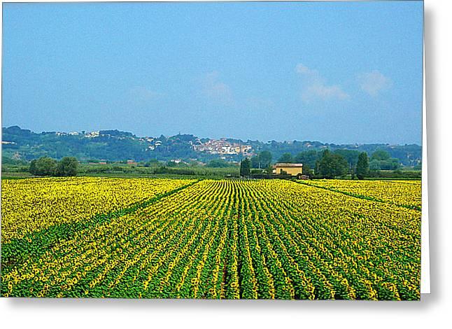 Kid Photographs Greeting Cards - Sunflowers Field of Tuscany Italy Greeting Card by Irina Sztukowski