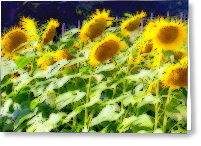 Inflorescent Greeting Cards - Sunflowers in Abstract Greeting Card by Caroline Stella