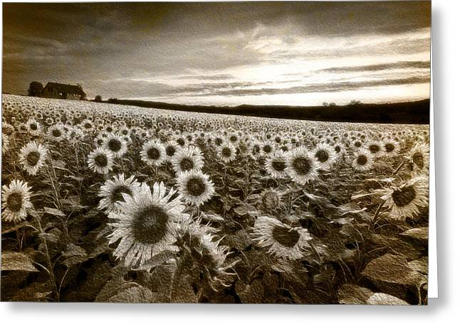 Swiss Photographs Greeting Cards - Sunflowers in Sepia Greeting Card by Debra and Dave Vanderlaan