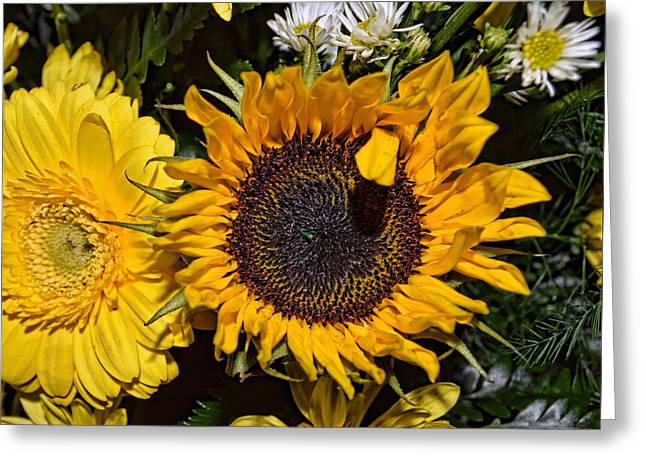 Daiseys Greeting Cards - Sunflowers Greeting Card by Mark Orr