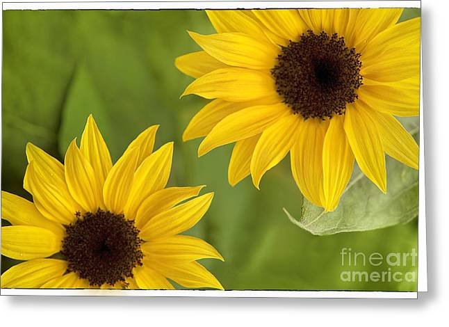Sun Room Digital Art Greeting Cards - Sunflowers Greeting Card by Natalie Kinnear