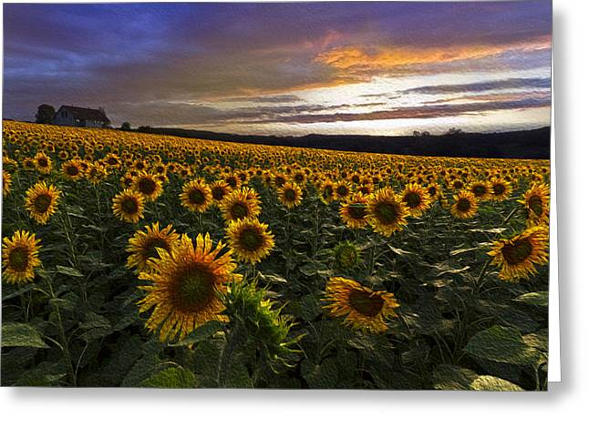 Kansas Landscape Art Greeting Cards - Sunflowers Oil Painting Greeting Card by Debra and Dave Vanderlaan