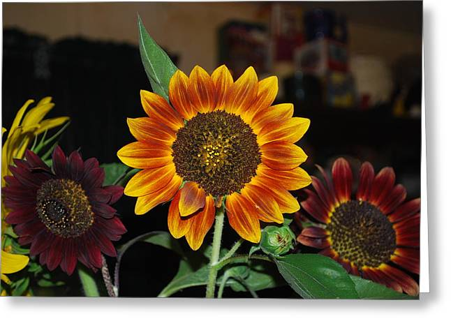 From Seed Greeting Cards - Sunflowers Greeting Card by Robert Floyd
