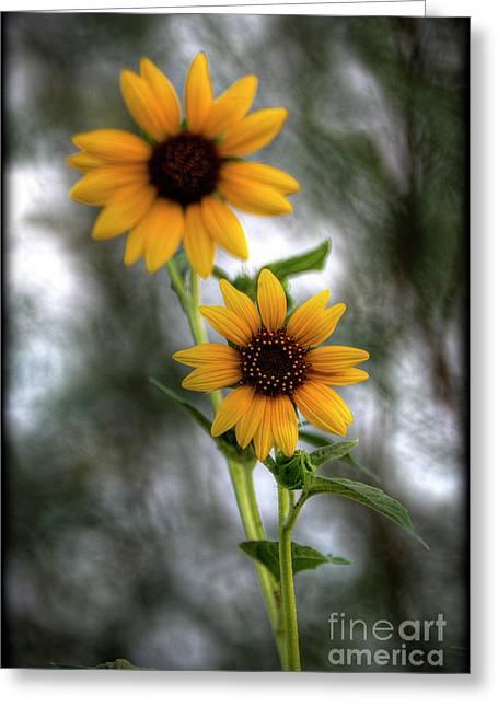 Yellow Sunflower Greeting Cards - Sunflowers  Greeting Card by Saija  Lehtonen
