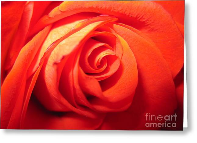 Texture Floral Drawings Greeting Cards - Sunkissed Orange Rose 4 Greeting Card by Tara  Shalton